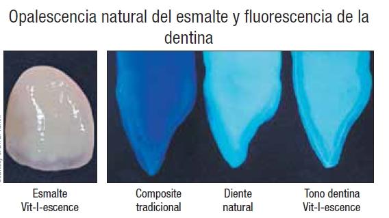 Foto de fluorescencia Vit-l-escence de catálogo